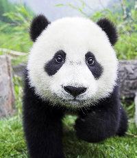 木鱼子bear